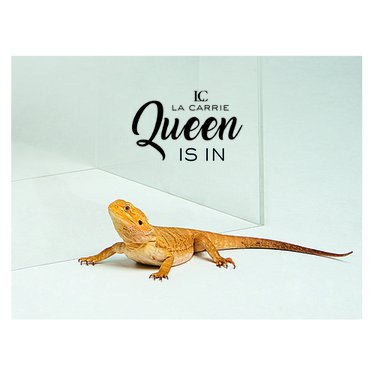 La Queen Collection disponibile su e-commerce!